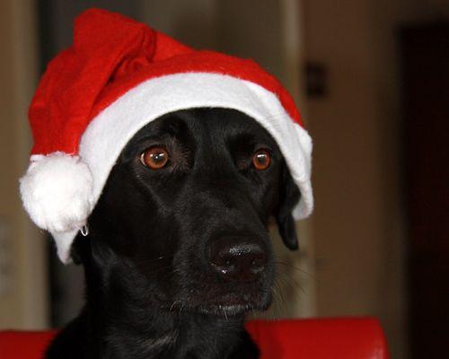 .....Frohe Weihnachten.....
