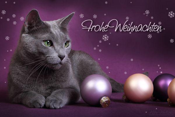 ... Frohe Weihnachten ....
