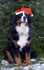 """"""" Frohe Weihnachten!"""""""
