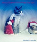 Frohe Weihnachten und alles Gute für 2011