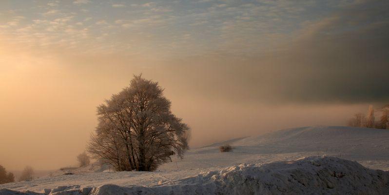 froid matinal