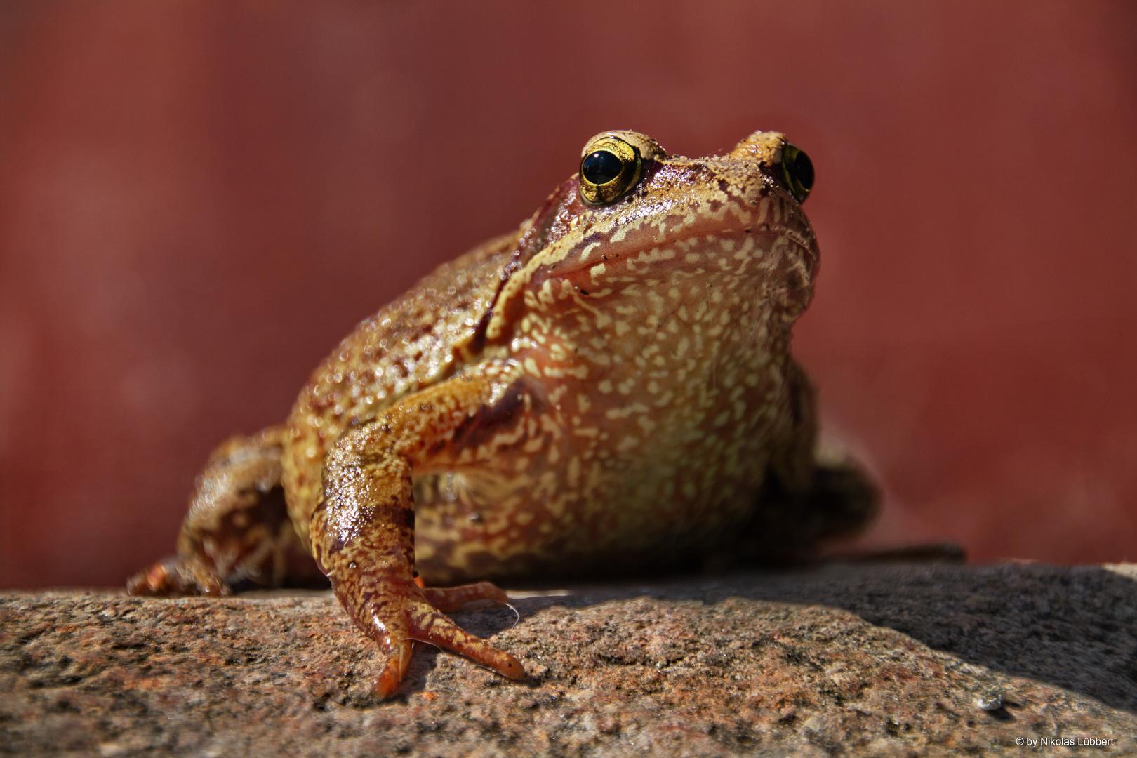 Frosch #2