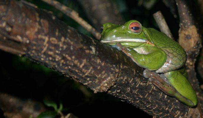 Frosch auf dem Baum