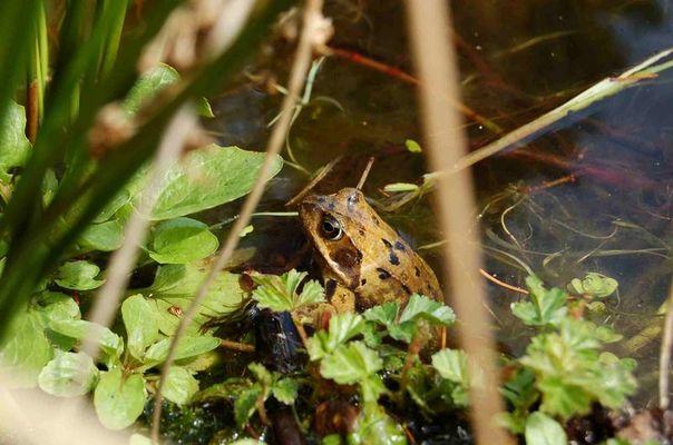 Frosch im April