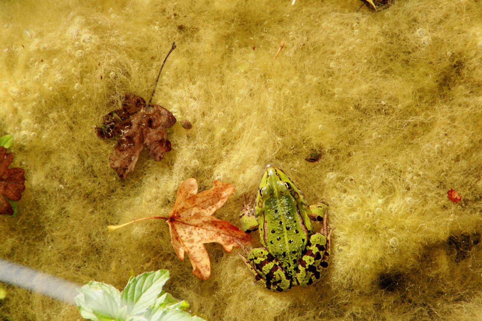 Frosch im Bild