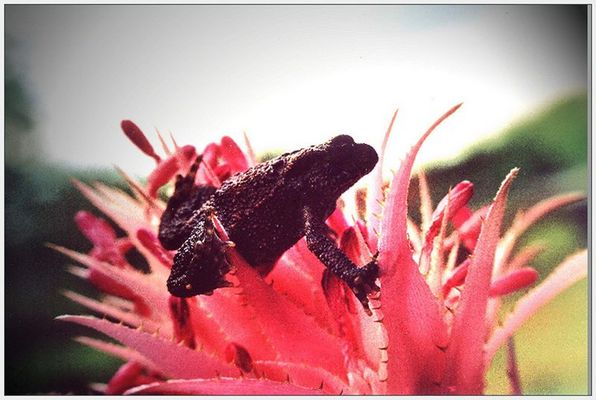 Frosch im Blütenrausch