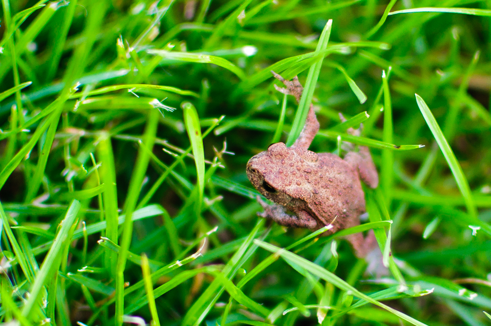 Frosch im Grasdschungel
