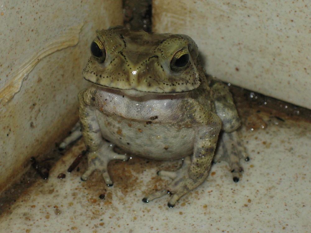 Frosch in der Dusche