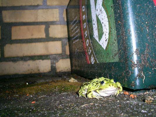 Frosch mit Bierkasten