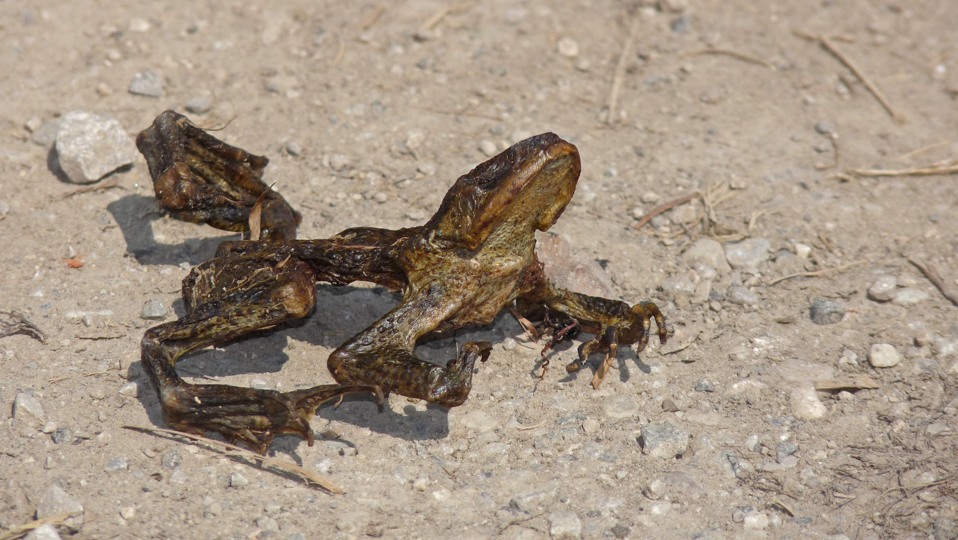 Frosch-ÖTZI