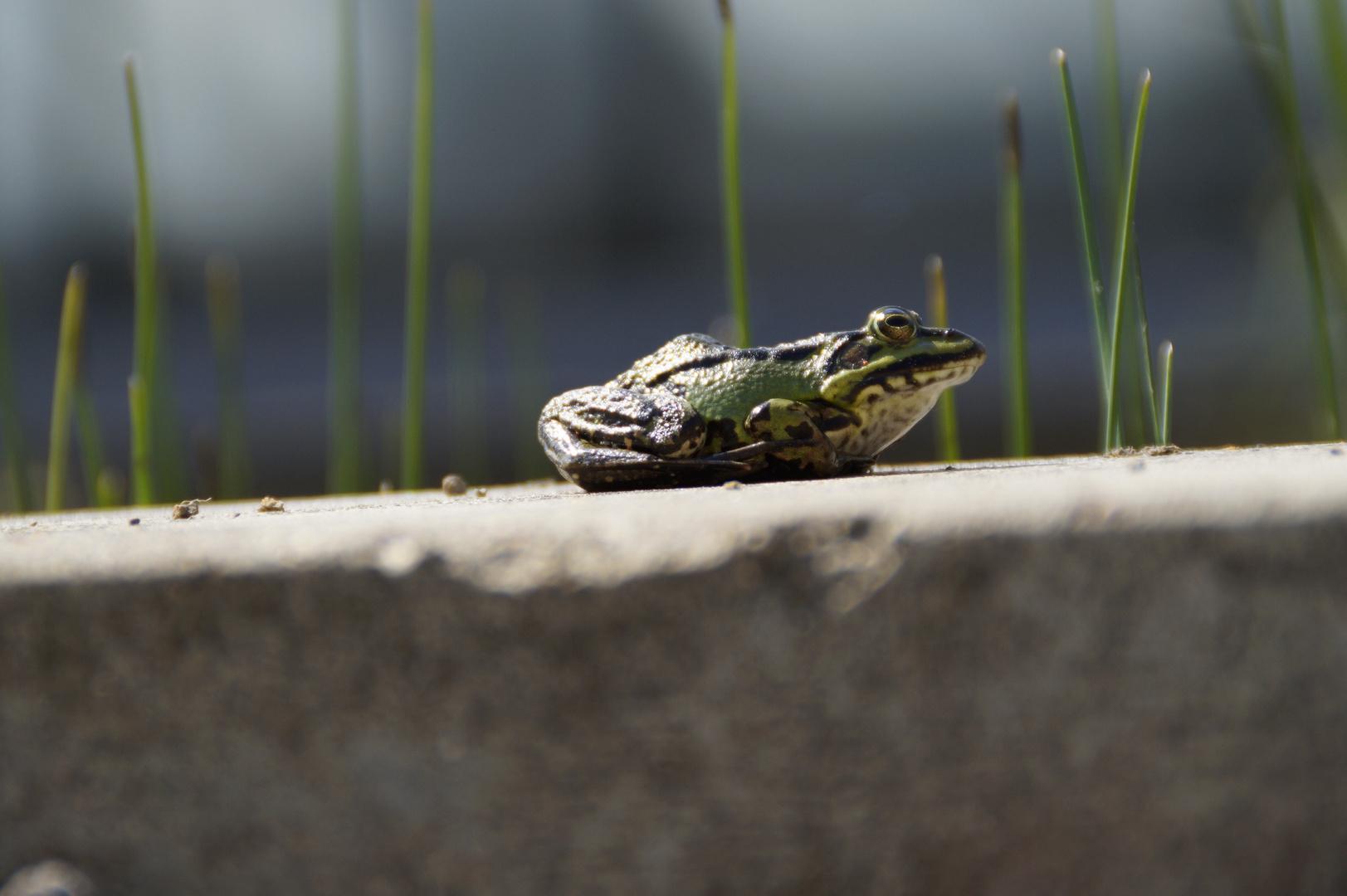 Frosch Perspektive