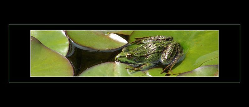 Frosch Strip
