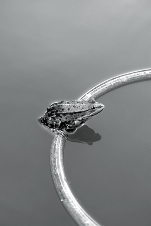 Frosch und Ring