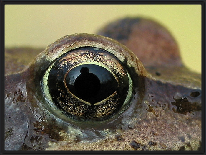 Froschauge :)