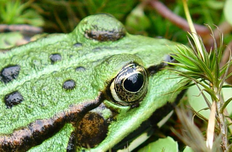 Froschaugenaufnahme by Günter Brauner