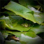 Froschhöhle