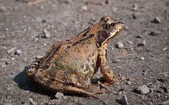 Froschige Frühlingsgrüße