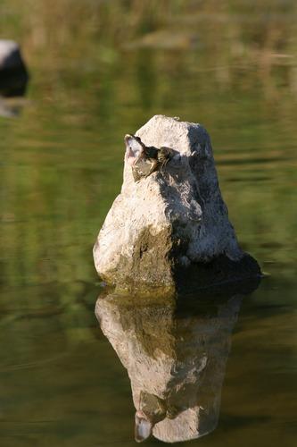 Froschkönig auf Thron, dem Langweilig wird