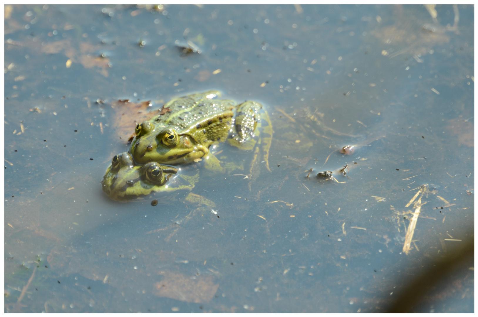 Froschpanne
