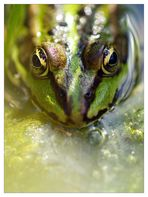 Froschportrait
