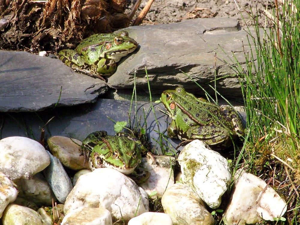 Froschversammlung
