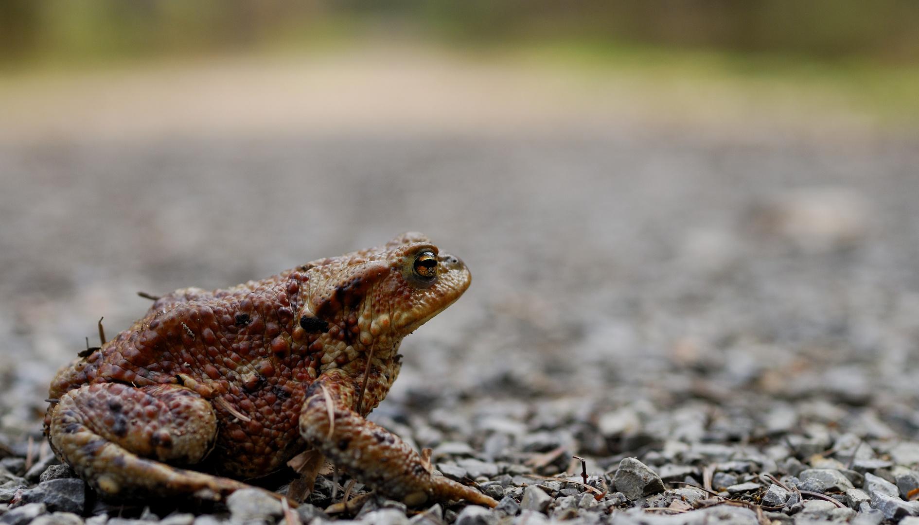 Froschwanderung