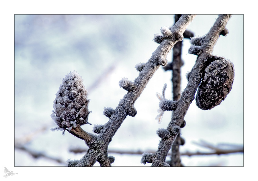 frost (01)