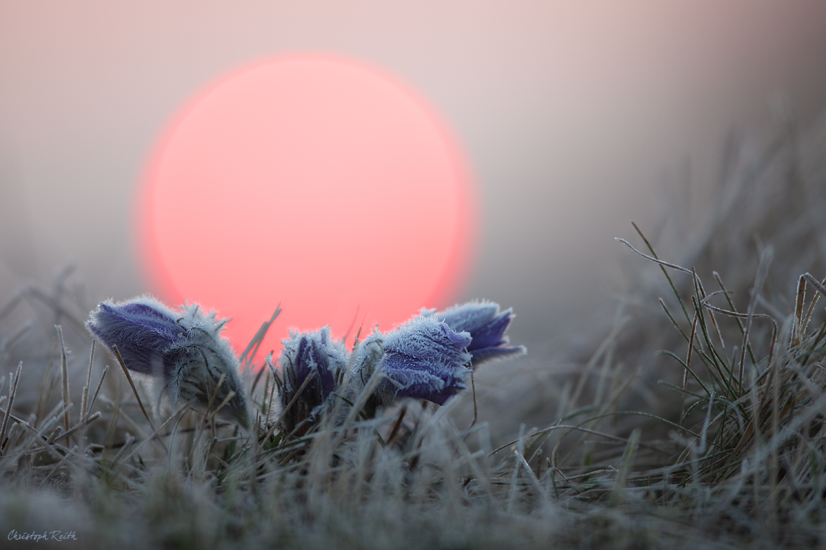 ~Frost~