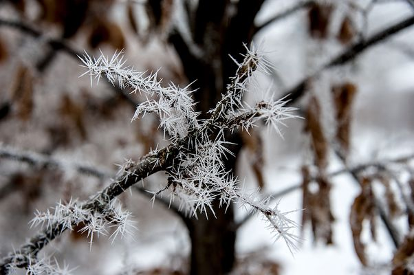 Frost....