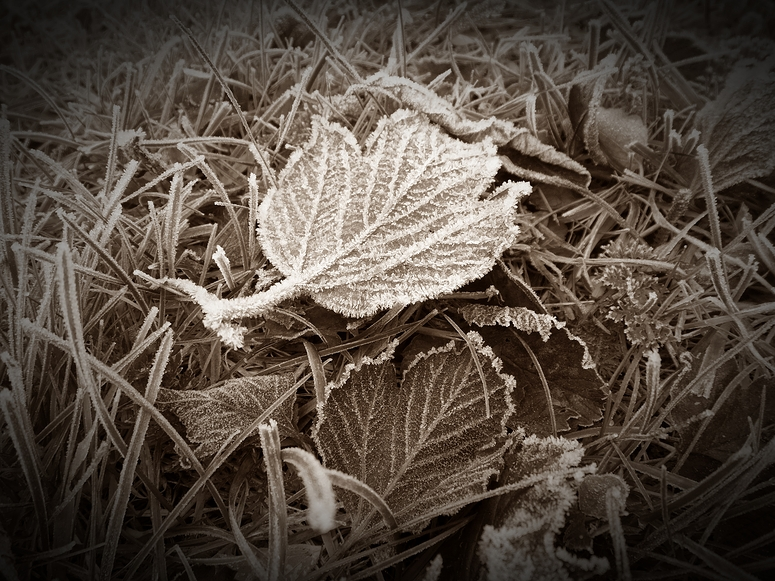 ...Frost...