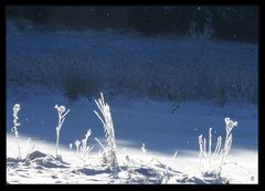 Frost am See...