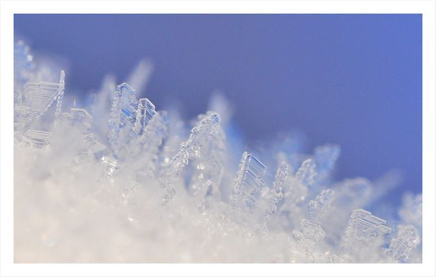 Frost-Bäumchen