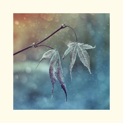 Frost-Blättchen...