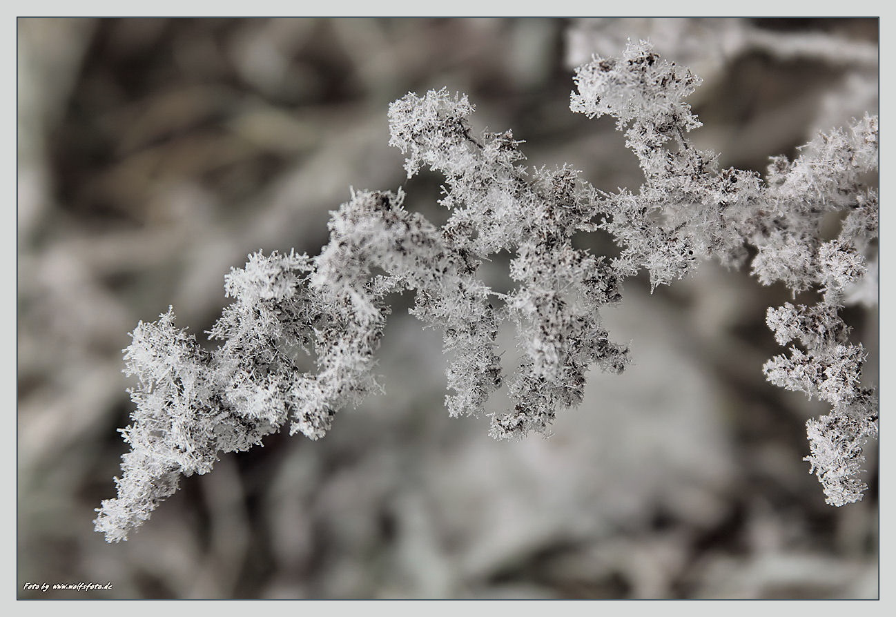 Frost filigran