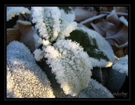 Frost I