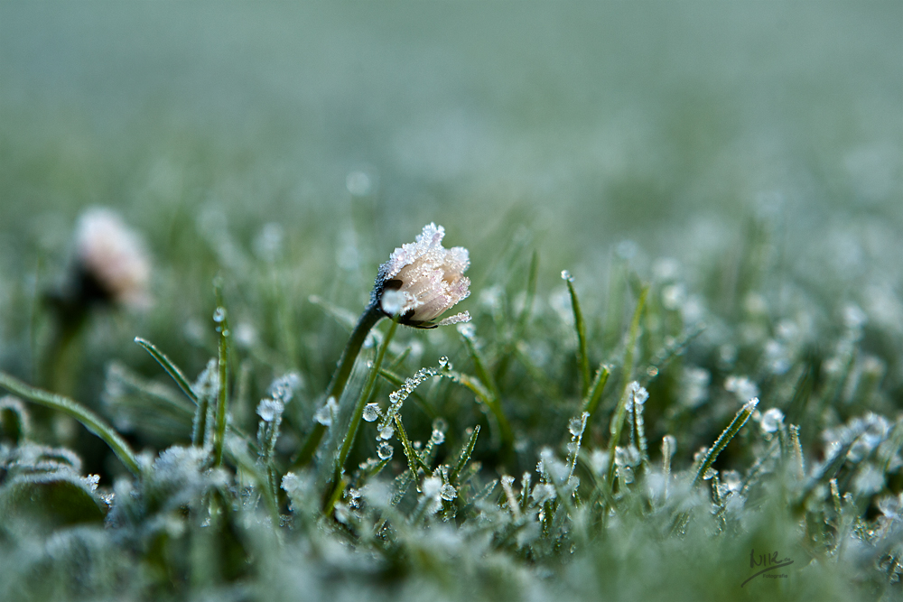 Frost miracles...
