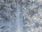 Frostbilder am Fenster