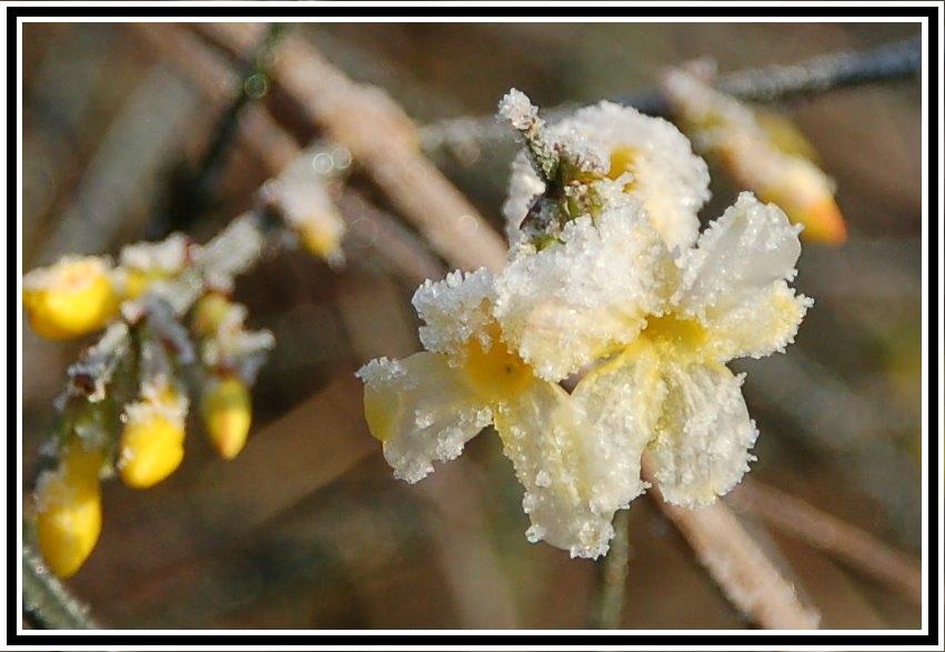 Frostblüten....