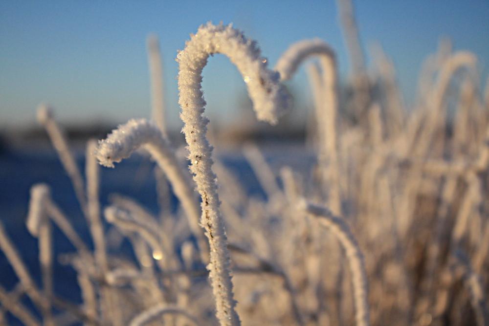 Frostig Eis 3