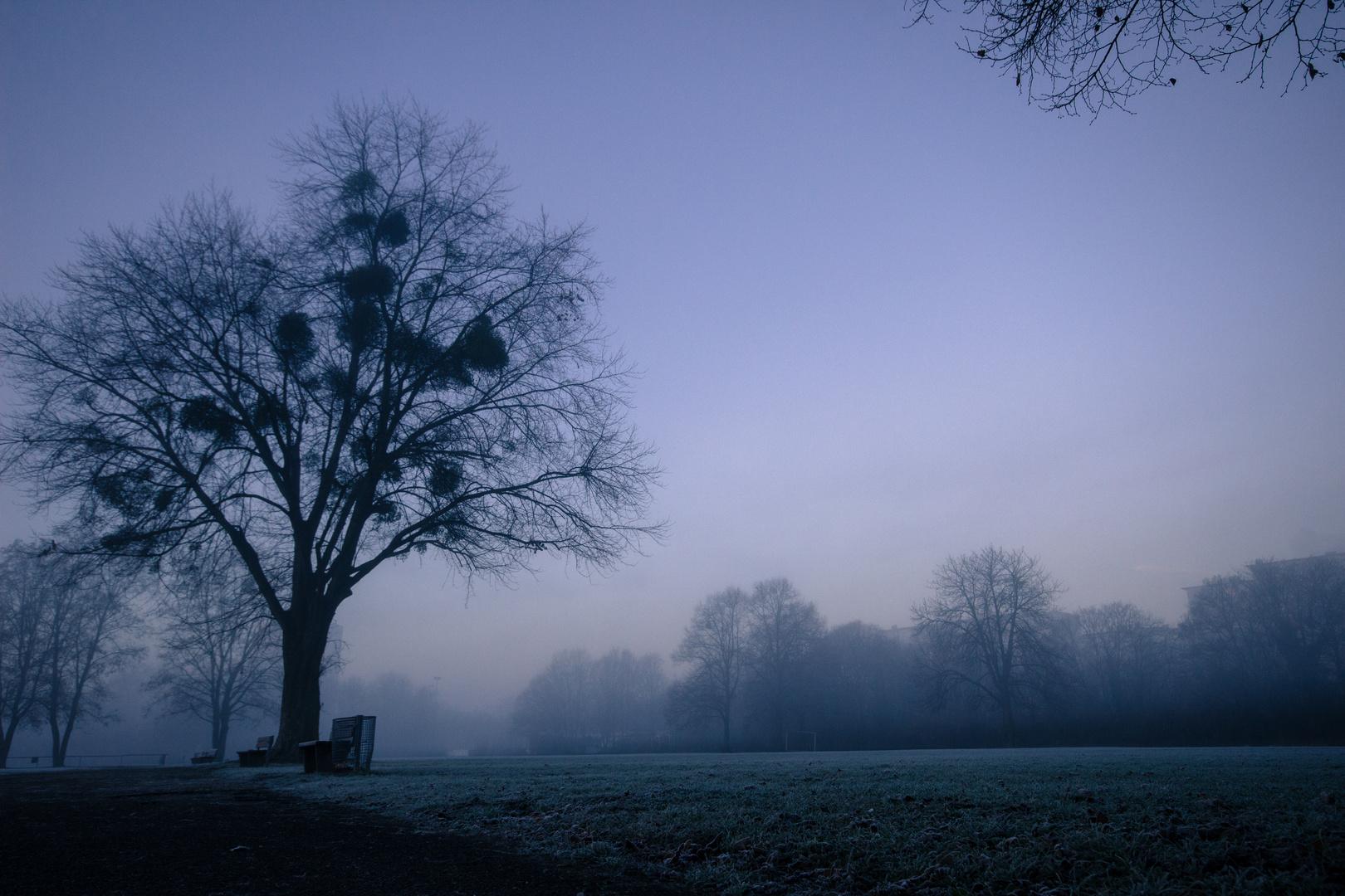 Frostig nebeliger Morgen