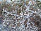 Frostig schön