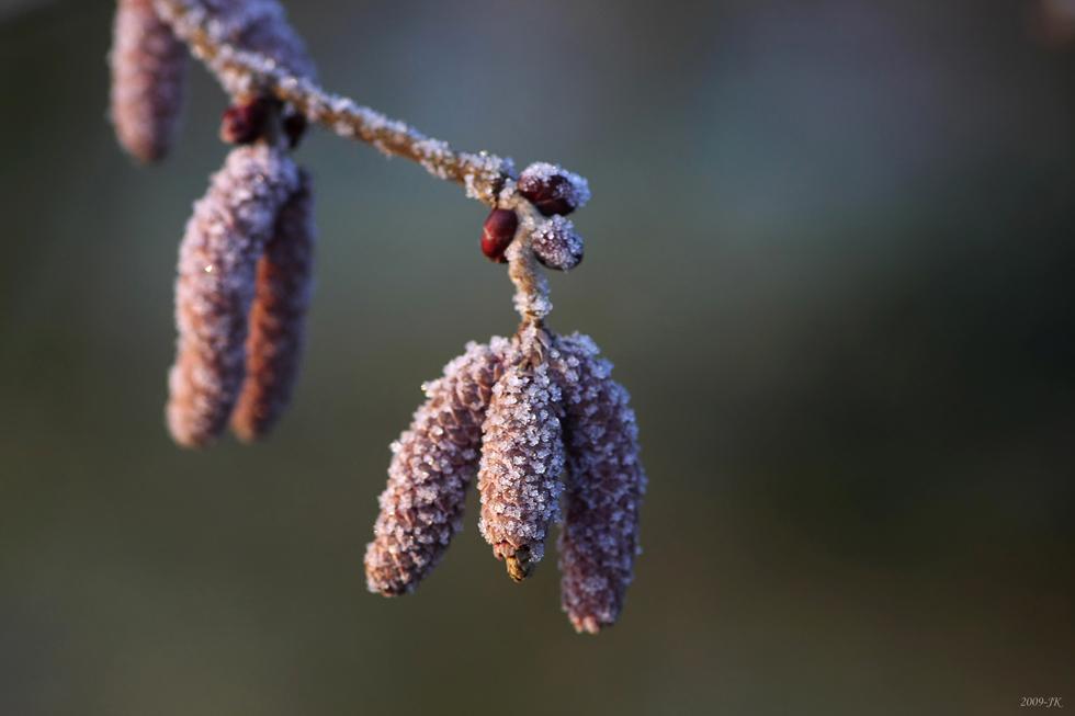 frostige Baumwürmli