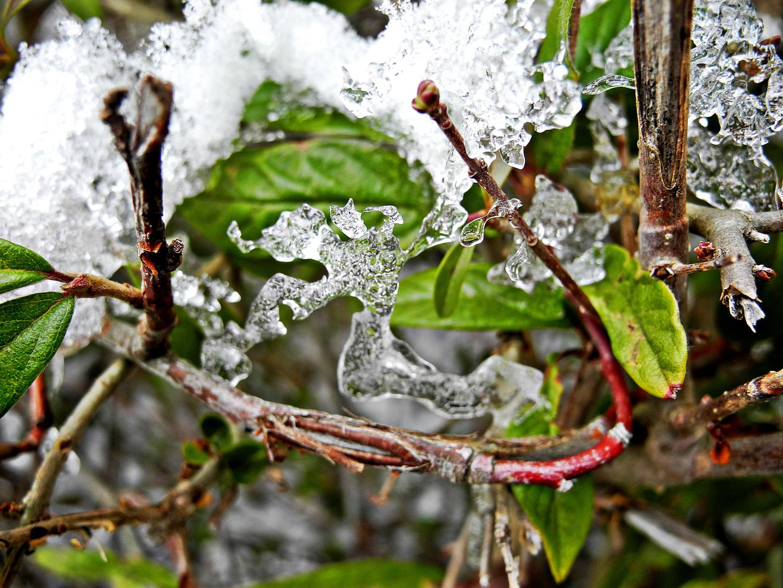 Frostige Blüten