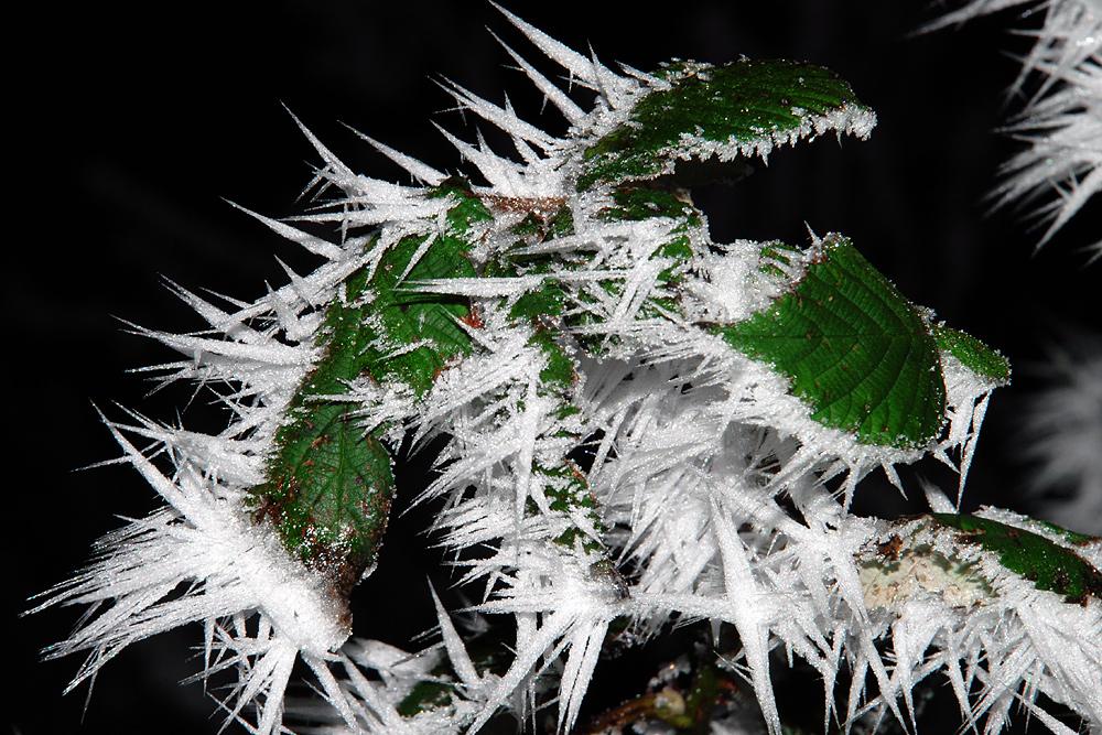 Frostige Erscheinung (1)