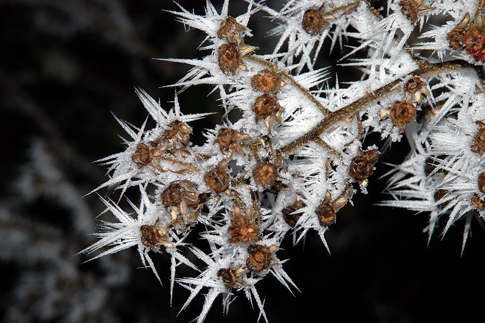 Frostige Erscheinung (2)