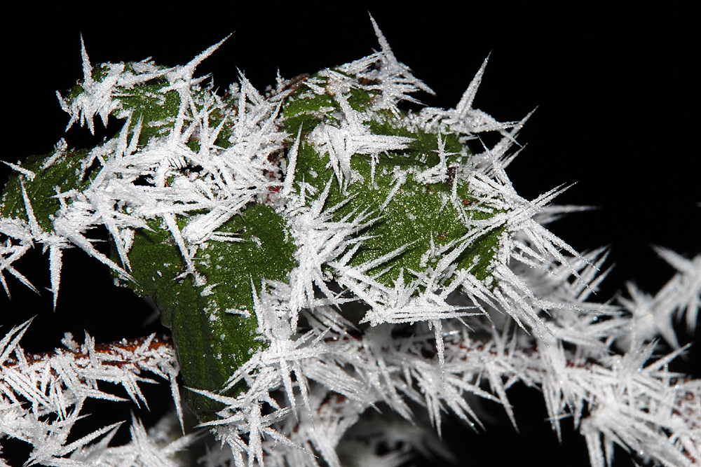 Frostige Erscheinung (3)