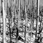 Frostige Fotos #1