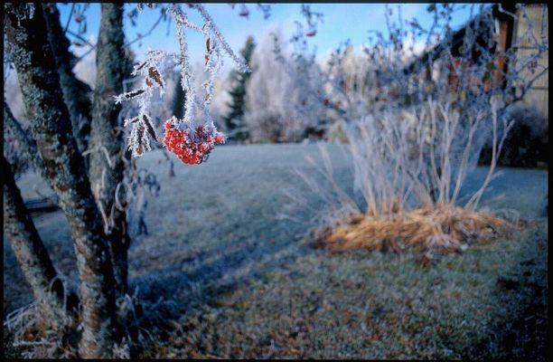 Frostige Früchtchen