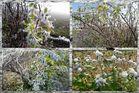 Frostige Naturschönheiten