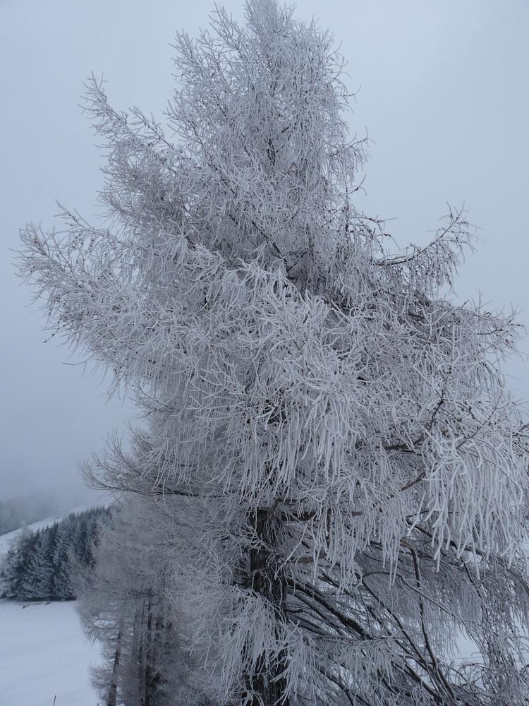 frostige Temperaturen